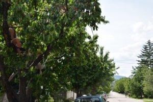 cseresznye telep (4)