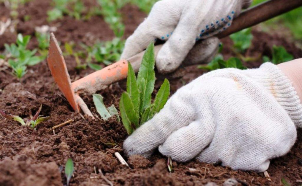 Talajtakaró a gyomirtás és a talaj egészségéért